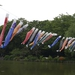 Photo of the day: Koinobori
