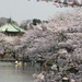 Special cherry blossom-viewing spots 2015